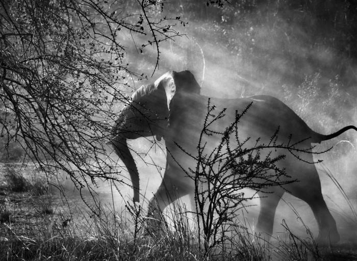 Kafue National Park, Zambia, 2010 - Sebastião SalgadoAmazonas ImagesContrasto